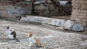 Harbour Baths at Ephesus (7/8)