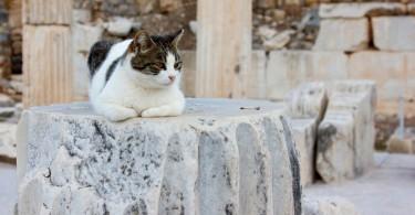 Ephesus Cat at Ephesus Ancient City